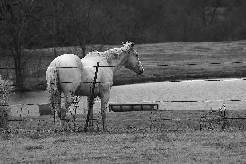 horse standing in a pasture near a pond