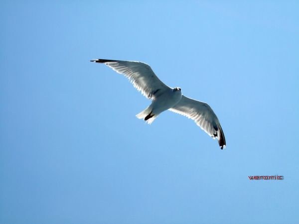 Fly way