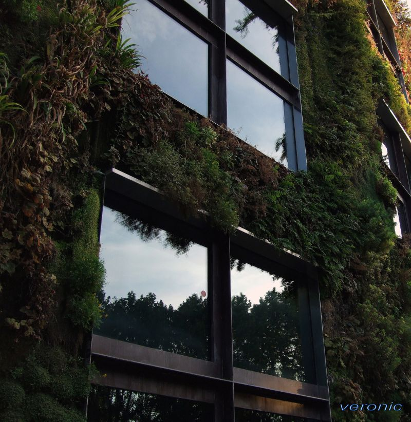Half gras half windows