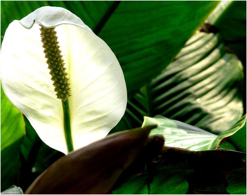 Queensland Garden