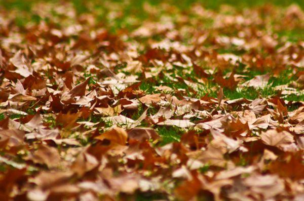 Melbourne Autumn 2