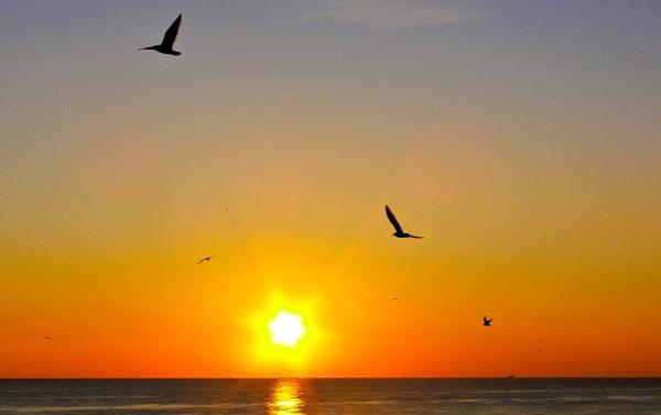 Sunset with Gulls