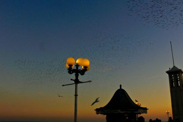 Brighton revisited