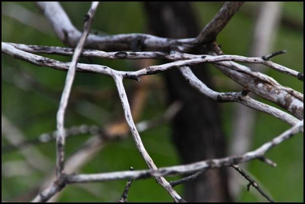 The bones of dead trees