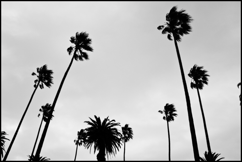 Where the palm trees do it hard.