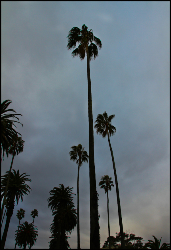 Winter Palms