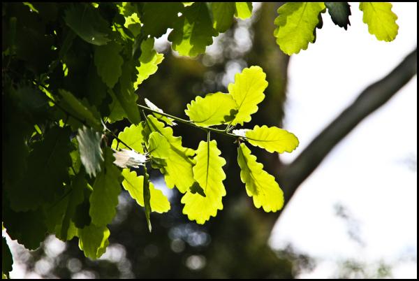 Spring Foliage 4