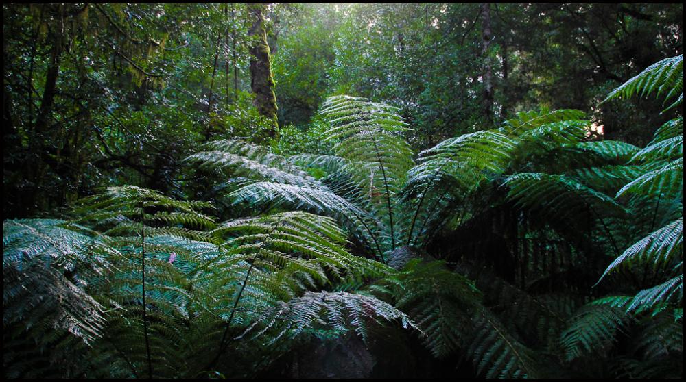 Cool climate Rainforest