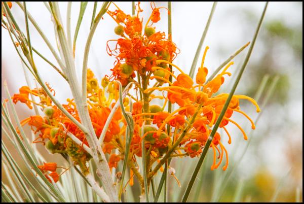 Roadtrip: Plant life 4