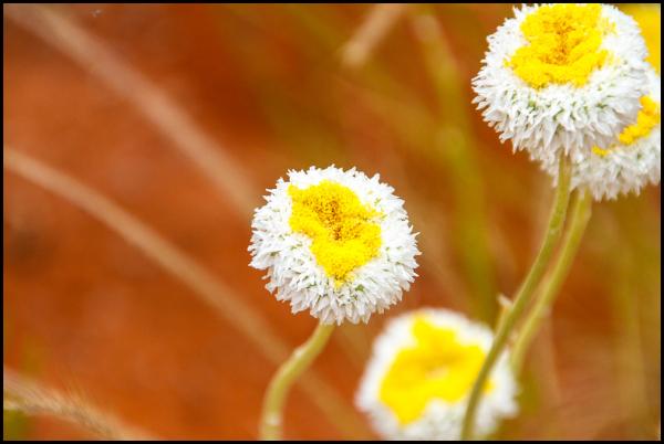 Roadtrip: Plant life 5