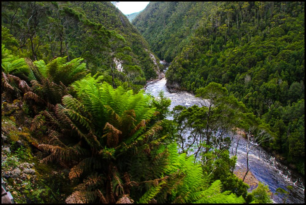 Tasmania 20