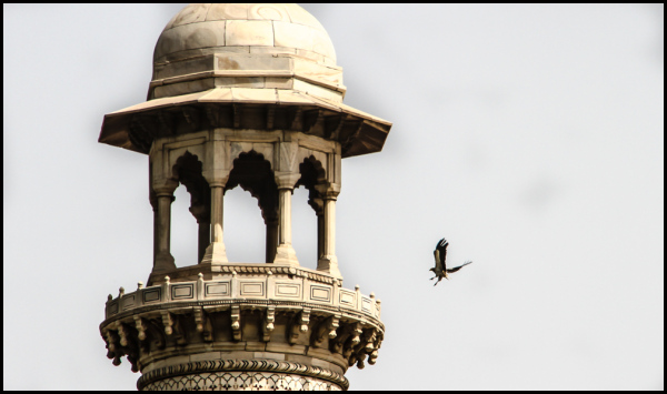 Eagles at the Taj