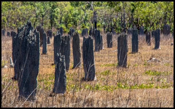 Magnetic termite nests
