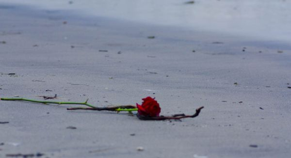 A lonely rose at the beach in Nijmegen