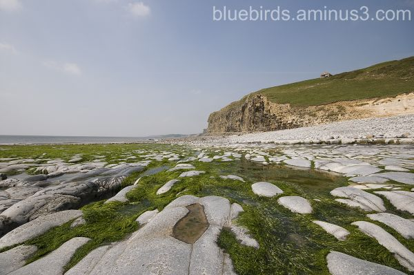 Traeth Mawr Algae