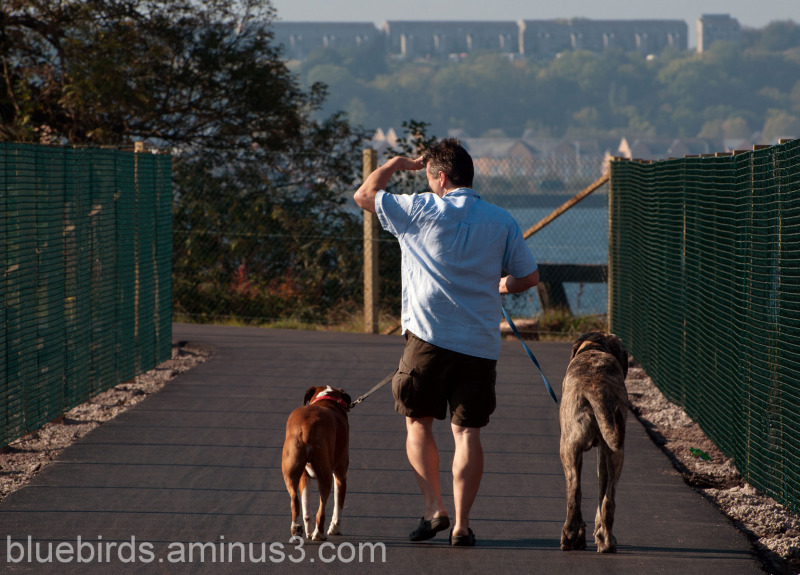 Walking the Dogs