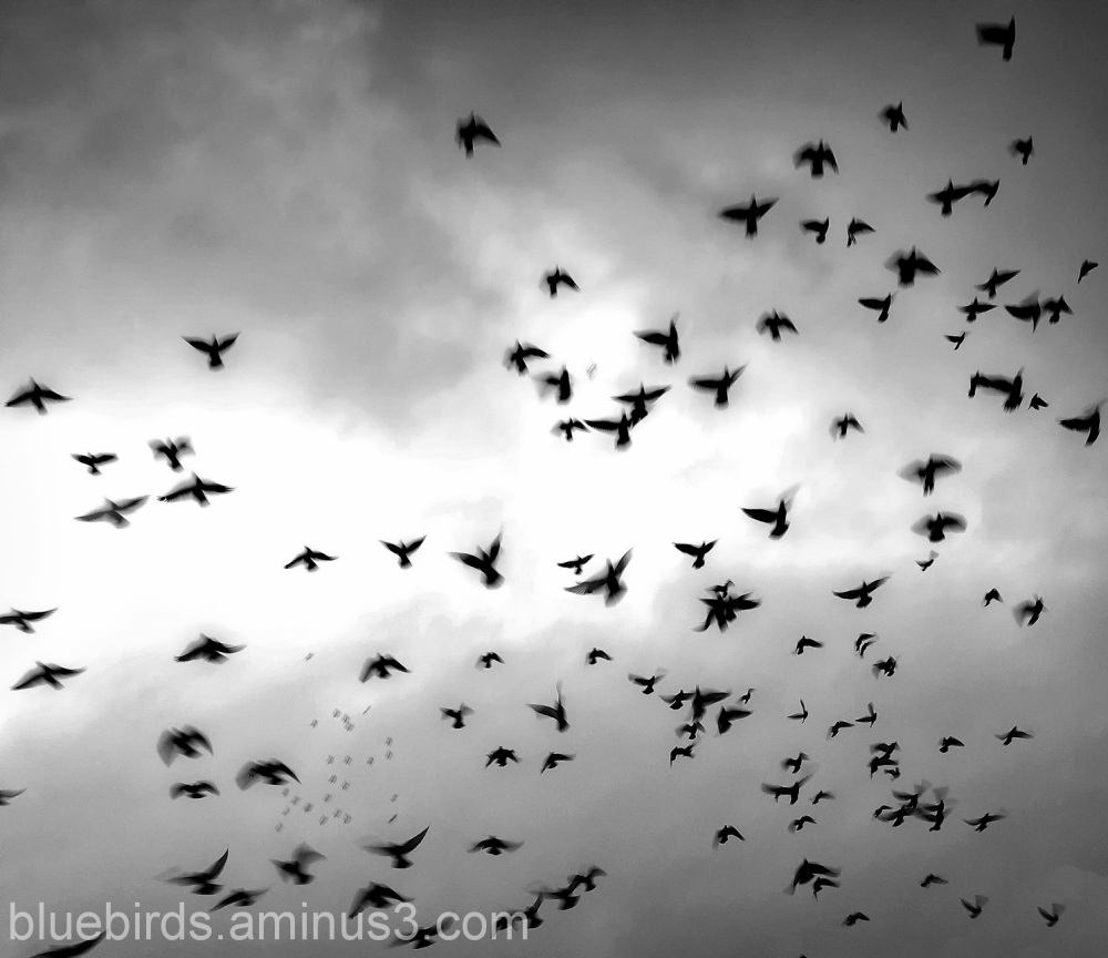 Penarth Pier Pigeons
