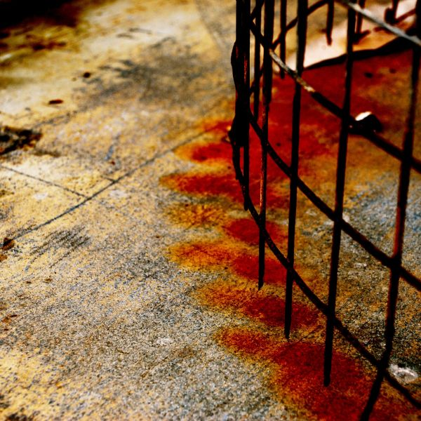 En cage...