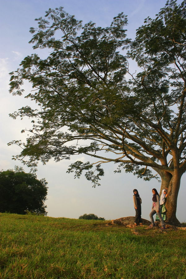 atas bukit ade pokok, sgt cantik xpenah lihat, ...