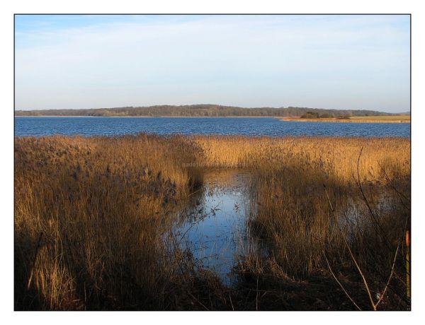 Les étangs de Lindre