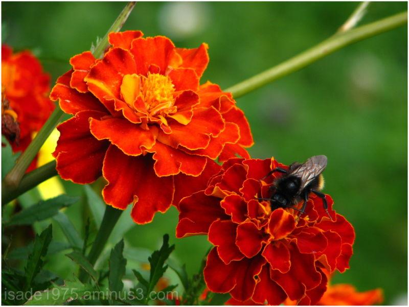 In the flower II