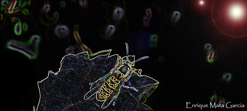 Galactic bee