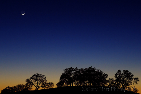 Crescent moon and oaks at sunset
