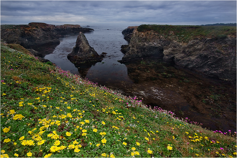 Wildflowers on the Mendocino coast, California