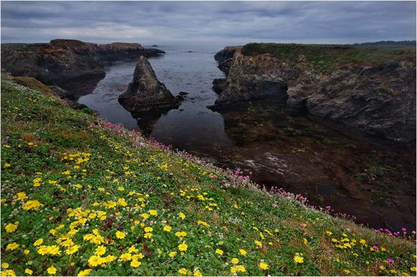Headlands Wildflowers, Mendocino
