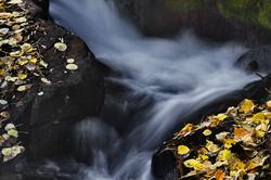 Fallen leaves line Mill Creek, Lundy Canyon