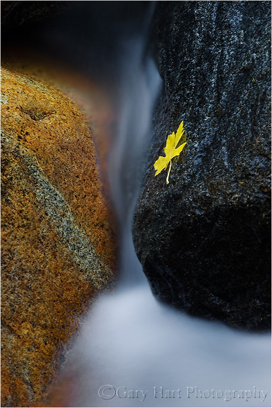 Single leaf clings to wet rock