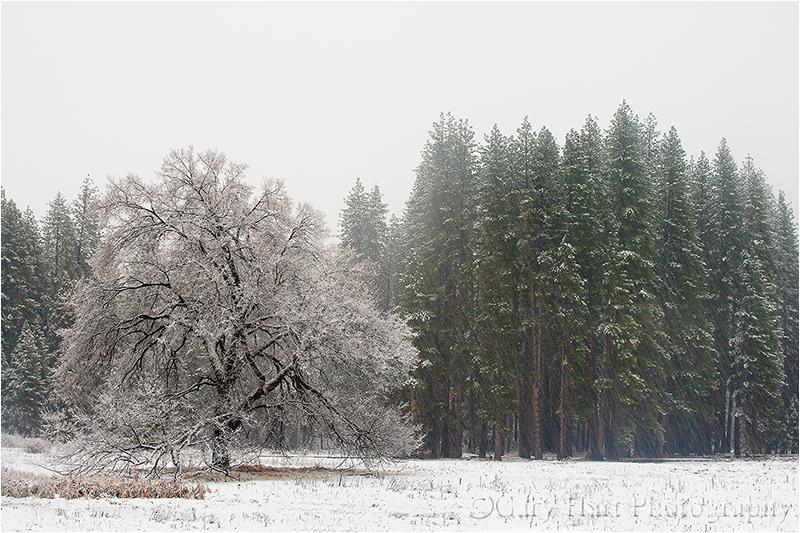 Snow falling in Yosemite
