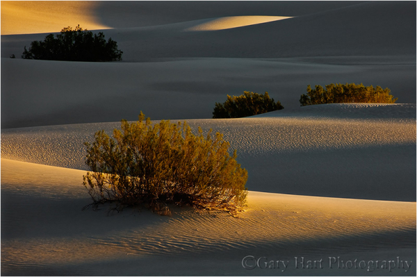 First light on Mesquite Dunes, Death Valley