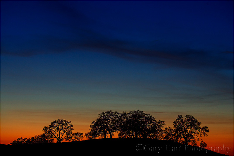 Oaks silhouetted against a California sunset