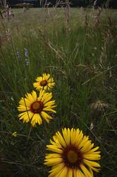 Wildflowers brighten a meadow in Rocky Mountain NP