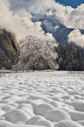 Yosemite's Cook's Meadow blanketed in winter white