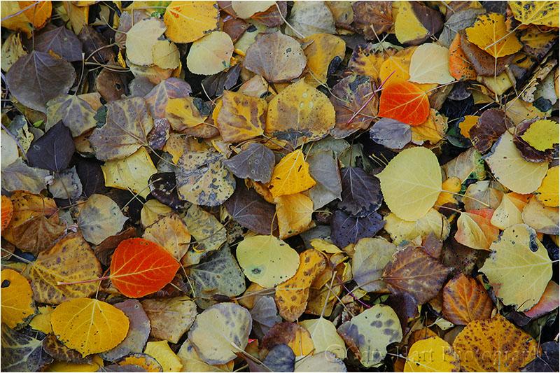 Autumn leaves blanket the ground near Rock Creek