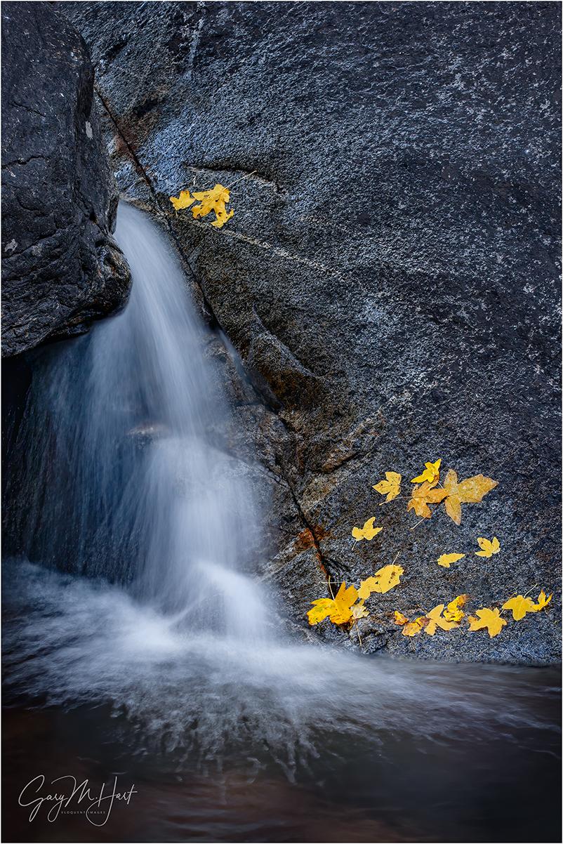 Bridalveil Creek fall color