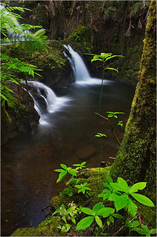 Onomea Fall, Hawaii Tropical Botanical Garden