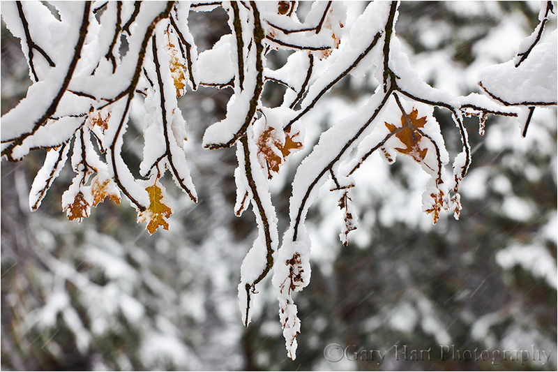 Fall and winter collide in Yosemite Valley