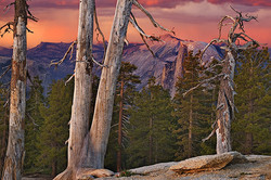 Half Dome and Trees, Sentinel Dome, Yosemite