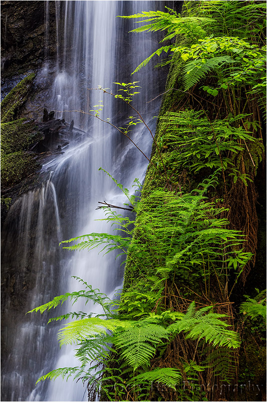 Fern Cascade, Russian Gulch Fall, Mendocino Coast