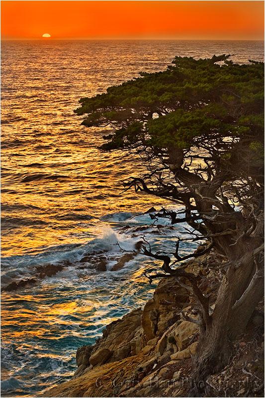 Cypress at Sunset, Point Lobos, Big Sur