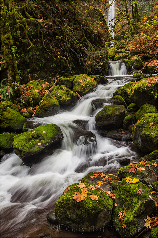 Fall Color, Elowah Fall, Columbia River Gorge, Or.