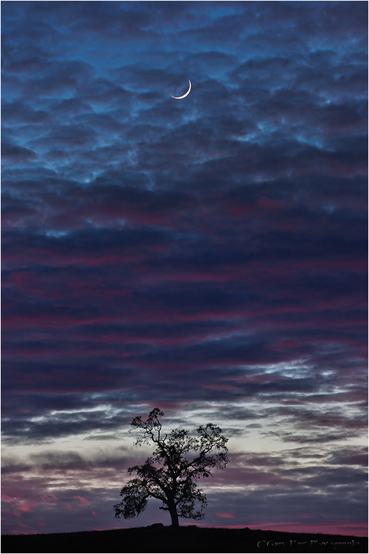 Crescent Moon and Tree at Sunset, Sierra Foothills