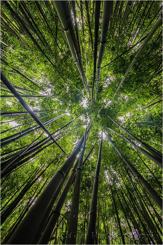 Bamboo Sky, Haleakala NP, Maui