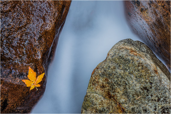Leaf and Rocks, Bridalveil Creek, Yosemite