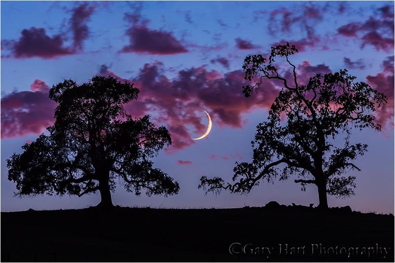 Crescent Moon at Sunset, Sierra Foothills
