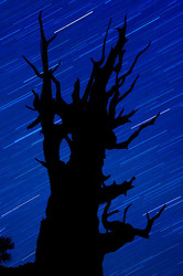 Bristlecone Star Trails, Schulman Grove