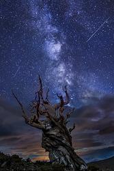 Bristlecone Night, White Mountains, California